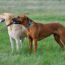 Adopcja psa – przemyśl to dobrze